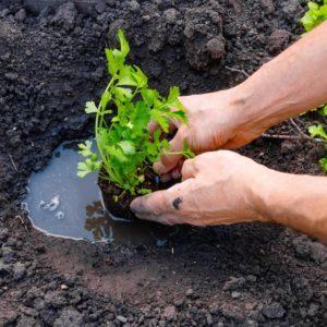 draper-utah-topsoil-delivery